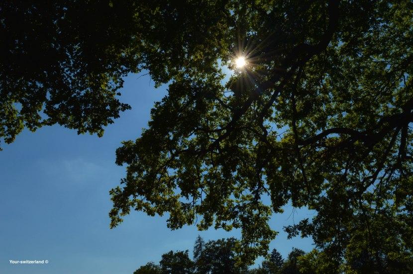 Sonne der Energielieferant